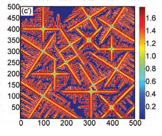 多个等轴晶生长形貌及溶质浓度分布